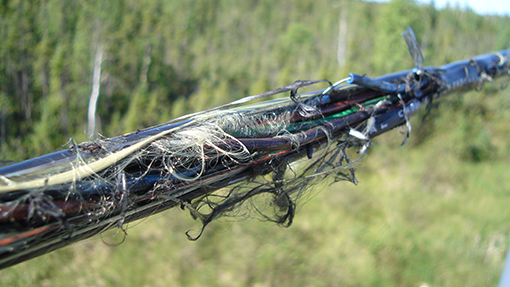 5 Cable Killers That Destroy Buried Fiber Cable Norscan